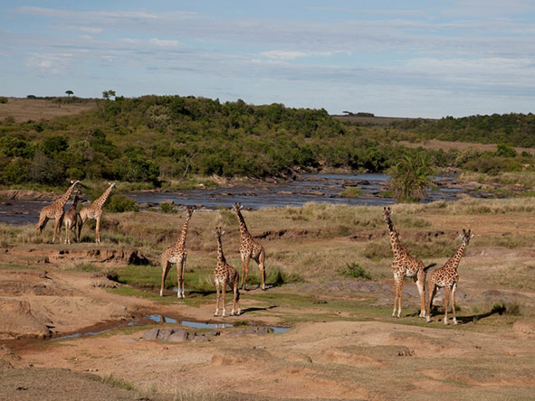 Serian Nkorombo Camp - Year-round game viewing