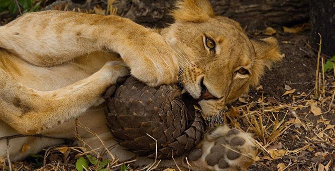 Where to Safari: Kenya or Tanzania Selous