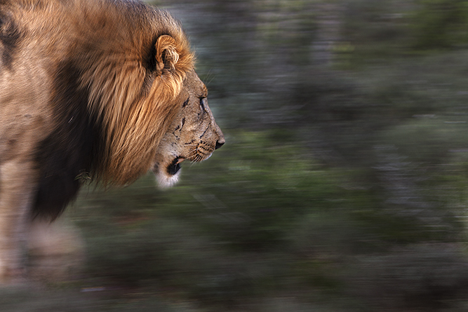 Photo Safaris in the Eastern Cape