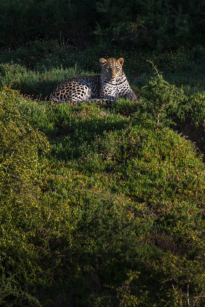 Photo Safaris in the Eastern Cape