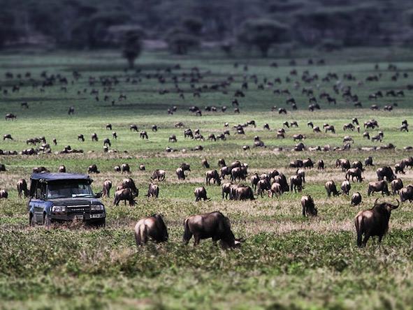 Kusini Serian Serengeti Mobile - migration