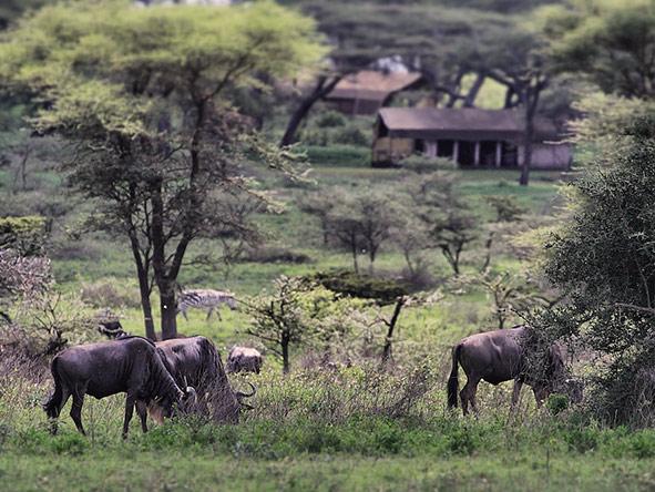 Kusini Serian Serengeti Mobile - sighting