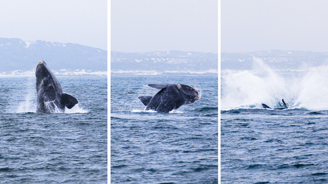Tips for Boat-Based Whale Watching