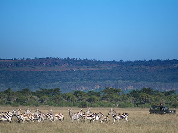 Mbweha Safari Camp - Gallery 9