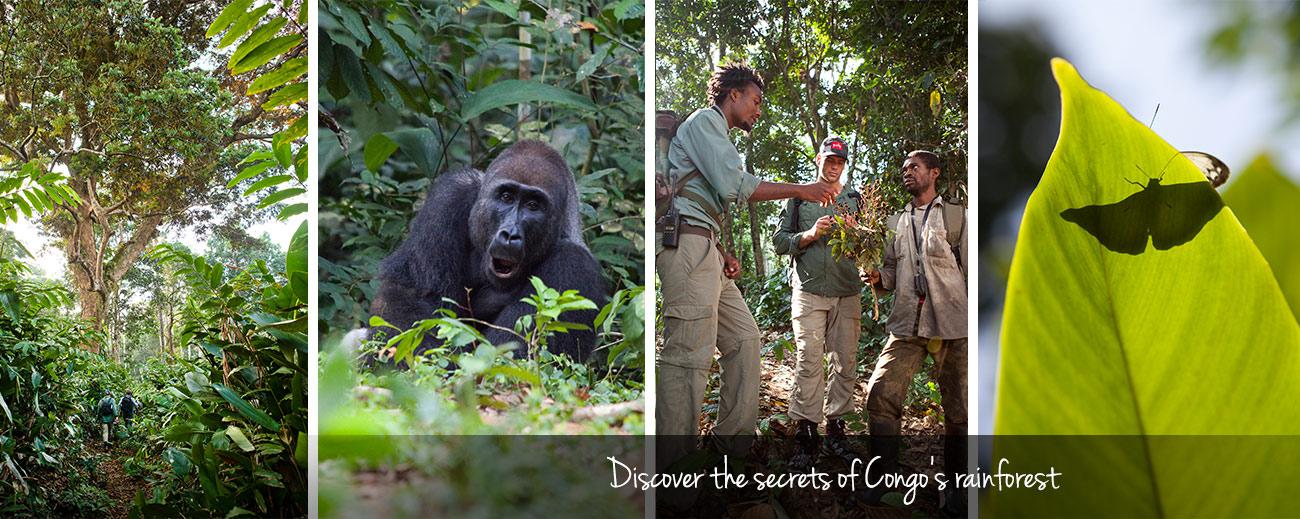 Congo Trek Banner