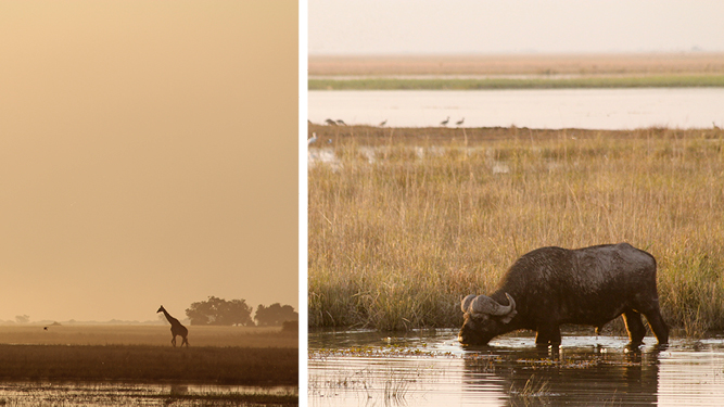 Recent Travels Botswana