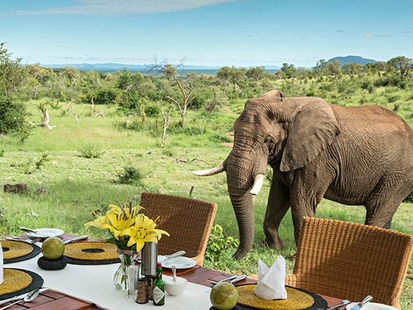 Royal Madikwe - dining