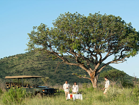 Royal Madikwe - game drive