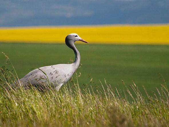 Bartholomeus Klip - birding