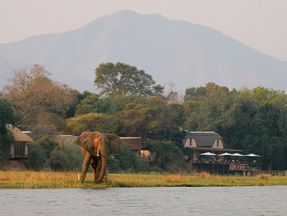Three Sanctuaries Safari in Zambia - elephant