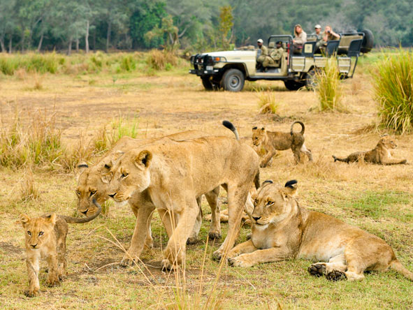 Chiawa camp game viewing