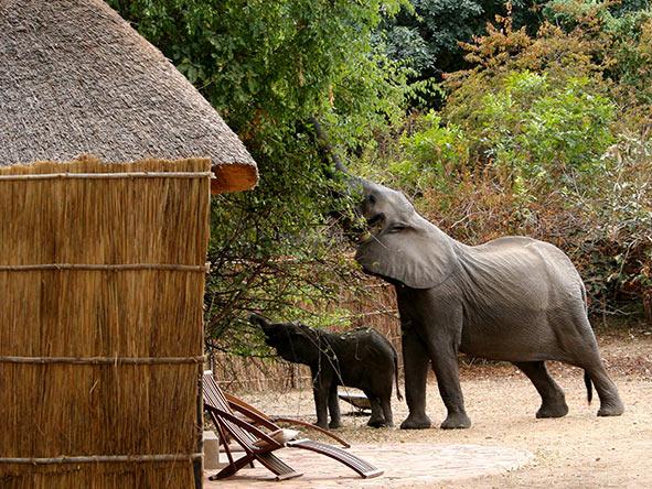 Kaingo wildlife