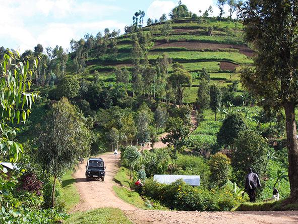 Rwanda Gorilla Encounter - Gallery 8