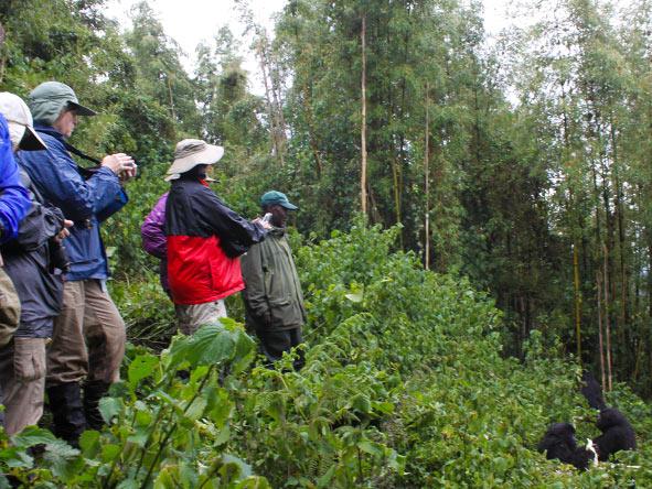 Rwanda Gorilla Encounter - Gallery 9