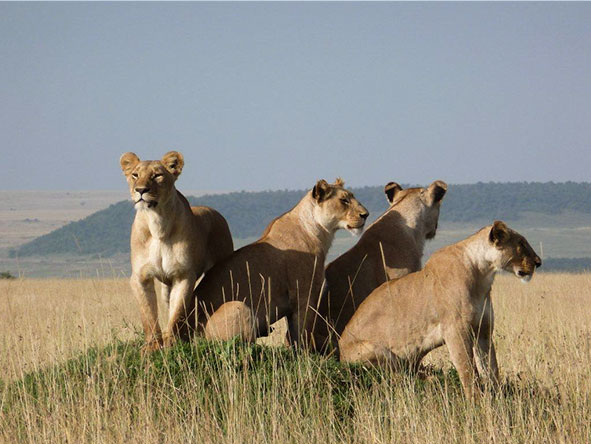 Kenya's Mara & Lake Sky Safari - Gallery 7