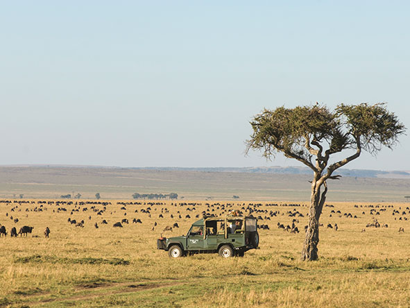 Kenya's Mara & Lake Sky Safari - Gallery 8