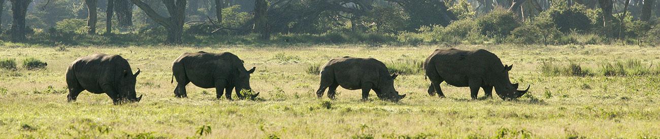 Kenya's Mara & Lake Sky Safari - Banner