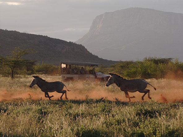 Luxury Mara & Samburu Experience - Gallery 8