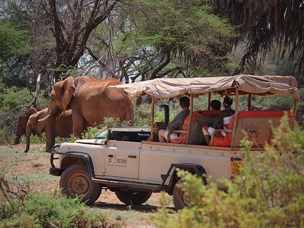 Luxury Mara & Samburu Experience - Gallery 9