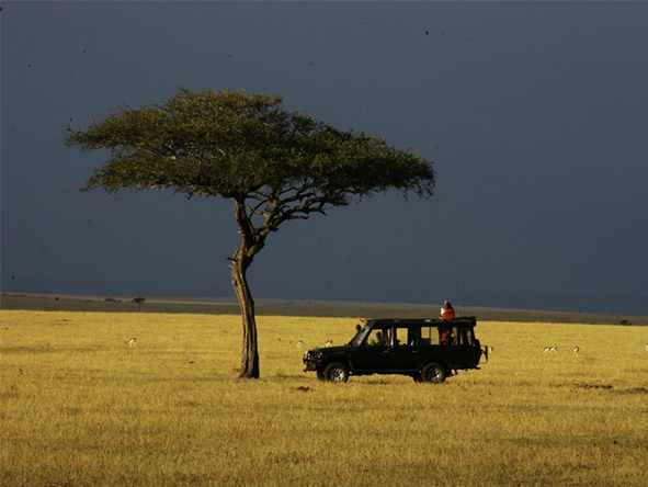 Private locations mean you'll enjoy exclusive sightings & low vehicle numbers on your game drives.