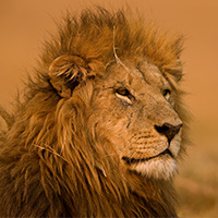 Where to Go in Africa to See Lions Featured image