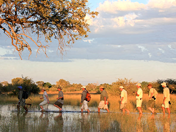 Mobile Safaris - walking in the South Luangwa National ParkOn Botswana's Selinda Canoe Trail you'll enjoy walking safaris too.