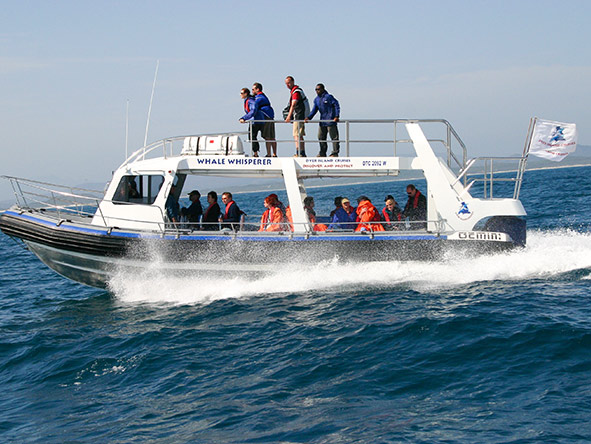 The whale watching boats often have an upper level where you can enjoy an elevated sea view.