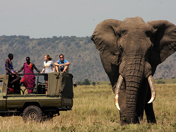 Open-sided game viewing vehicles mean unrestricted photographic opportunities on a Serian safari.