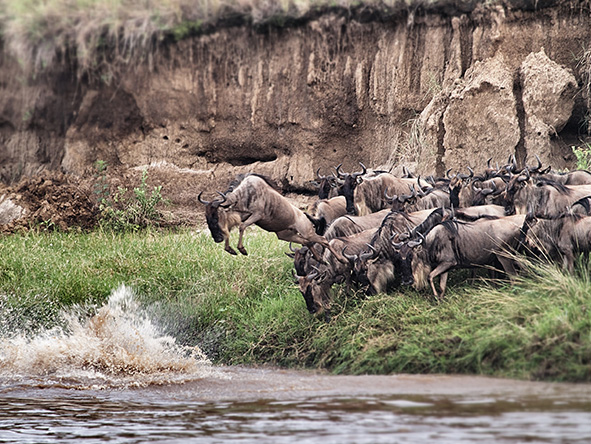 Several Serian camps are superbly placed for the migration's river-crossing season - ask us for more information.