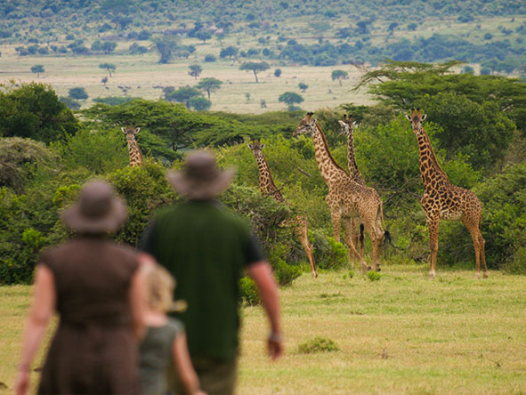 A Saruni safari is also about exploring on foot - in the company of expert guides of course!