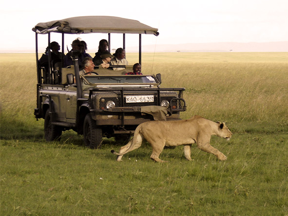 Saruni's modified 4X4s ensure everyone enjoys a view while on a game drive.