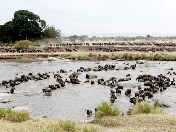 The migration river crossings - Africa's most dramatic game viewing -  is showcased at Lemala Kuria Hills.