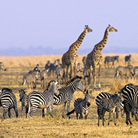 Where to Go in Africa in October