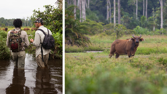 Boat, Kayak and Hike the Congo