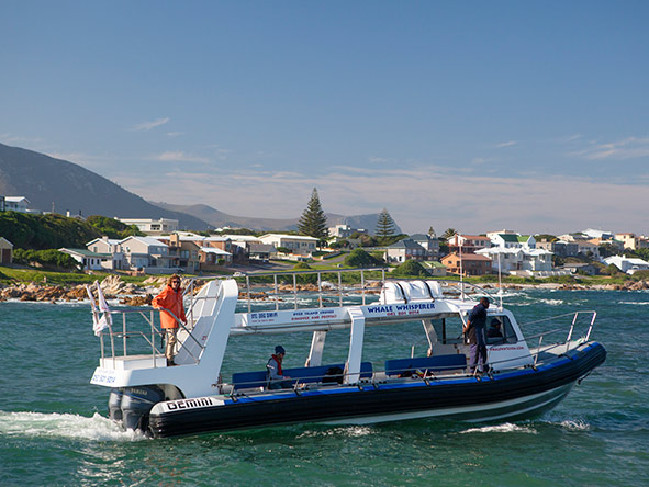 Walker Bay is where most of the Southern Cape whale watching trips take place.