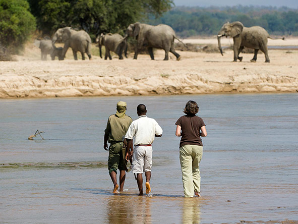 Dry season walking safaris are a great way to see wildlife at the water's edge.