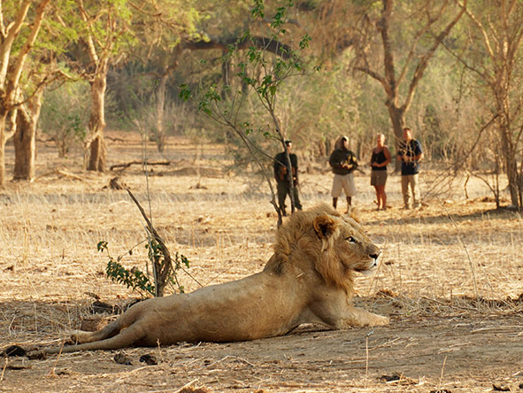 Even Africa's most formidable beasts can be safely seen on your walking safari.