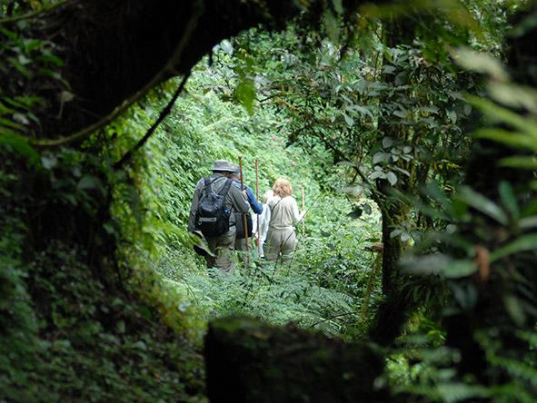 Exciting Gorilla Encounter - Gallery 5