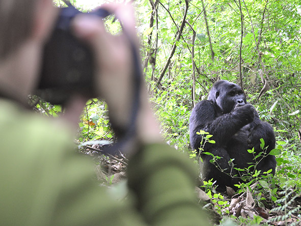 Exhilarating Gorilla Trekking Experience - gallery 7