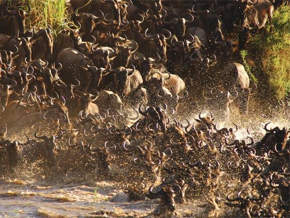Tented Tarangire, Serengeti & Masai Mara - Gallery 3