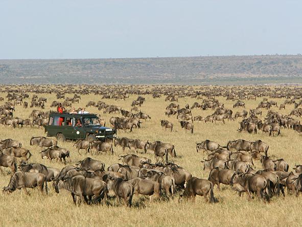 Tented Tarangire, Serengeti & Masai Mara - Gallery 5