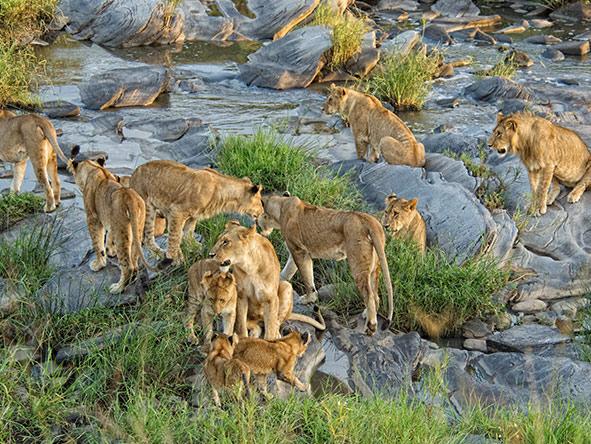 Tented Tarangire, Serengeti & Masai Mara - Gallery 7