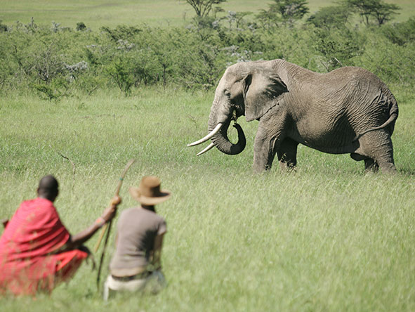 Tented Tarangire, Serengeti & Masai Mara - Gallery 8