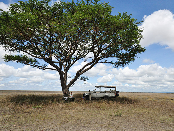 9nights Tanzania's Scenic Parks & Migration - Gallery 10