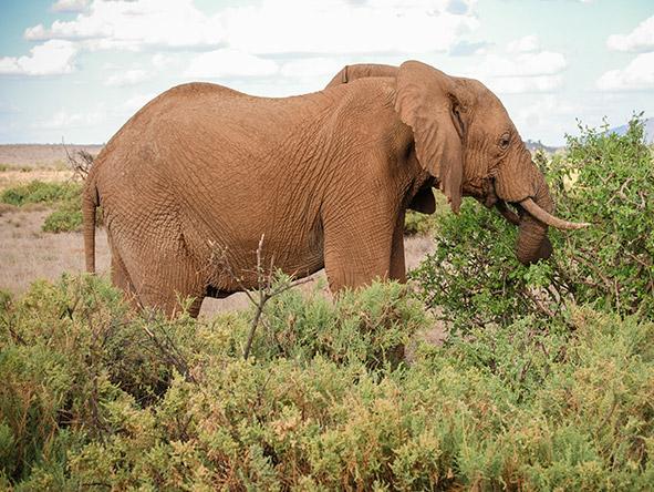 Kenya's Cultural Amboseli, Samburu & Mara - Gallery 4