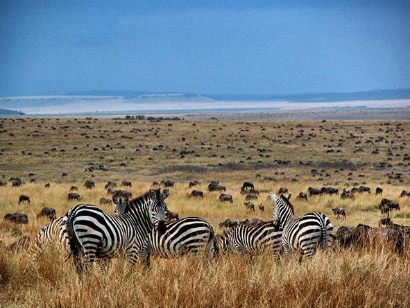 Exciting Vic Falls Kenya Adventure -  Gallery 4