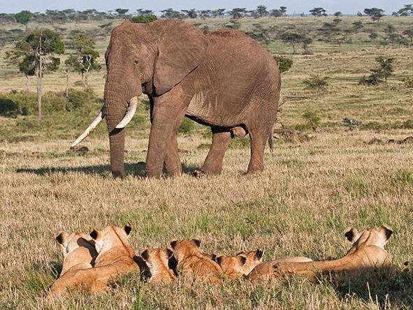 Exciting Vic Falls Kenya Adventure -  Gallery 6