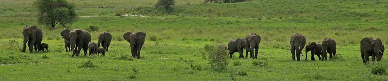 East Africa Landscape, Wildlife & Migration - Banner2