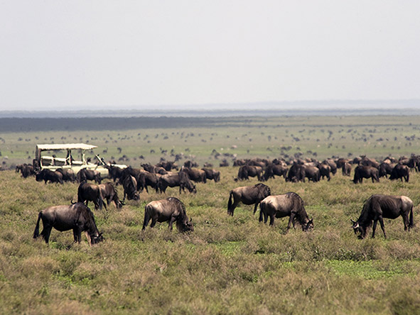 East Africa Landscape, Wildlife & Migration - Gallery 5