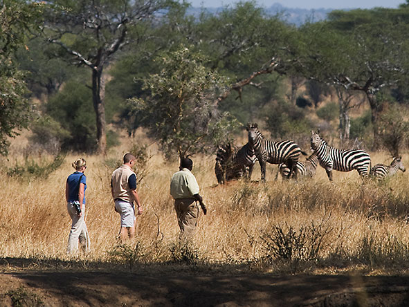 East Africa Landscape, Wildlife & Migration - Gallery 9